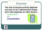 enzymes5