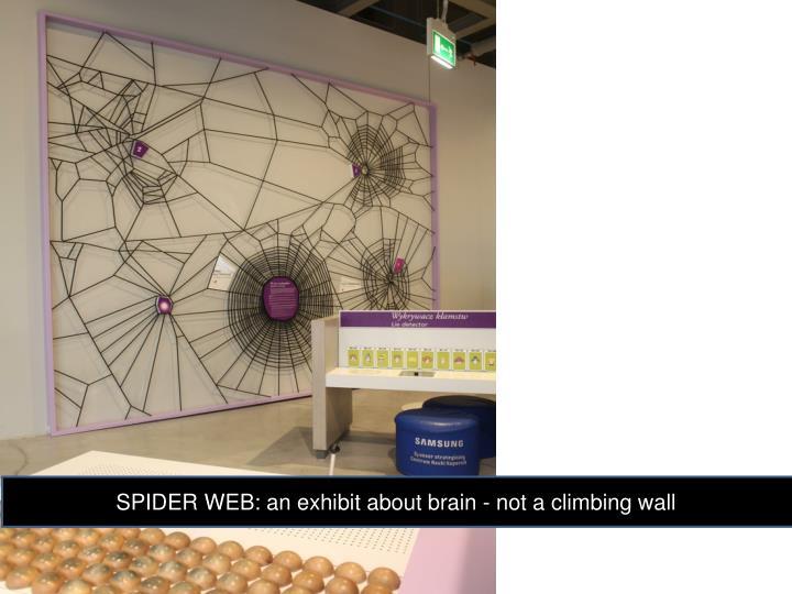 SPIDER WEB: