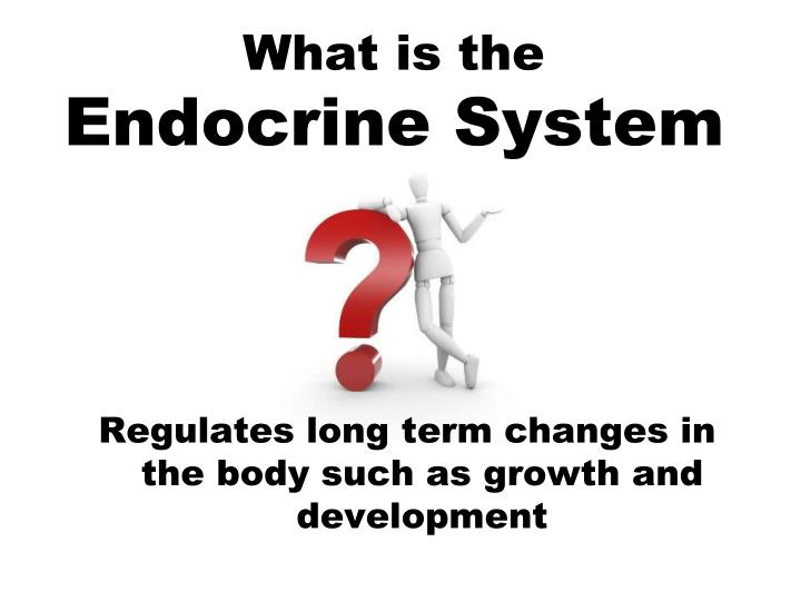 what is the endocrine system n.
