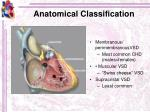 anatomical classification