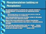 phosphorylation adding on phosphates