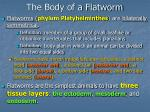 the body of a flatworm