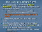 the body of a roundworm