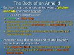 the body of an annelid