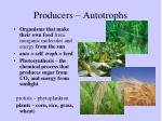 producers autotrophs