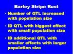 barley stripe rust1