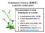 arabidopsis thaliana a genetic model plant