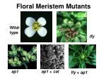 floral meristem mutants