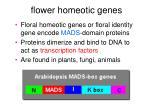 flower homeotic genes