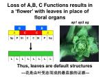 loss of a b c functions results in a flower with leaves in place of floral organs