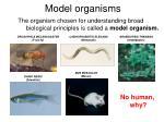 model organism s