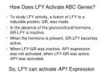 so lfy can activate ap1 expression