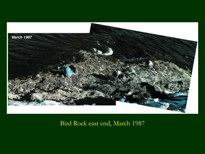 Bird Rock east end, March 1987