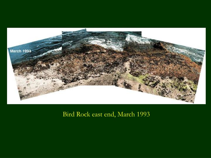 Bird Rock east end, March 1993