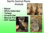 north central plains animals