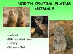 north central plains animals1