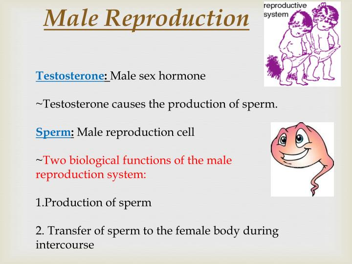 male reproduction n.