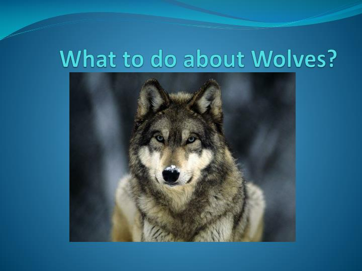 what to do about wolves n.