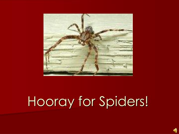 hooray for spiders n.