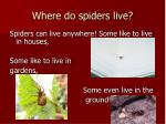 where do spiders live