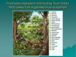 food webs represent interlocking food chains that connect all organisms in an ecosystem