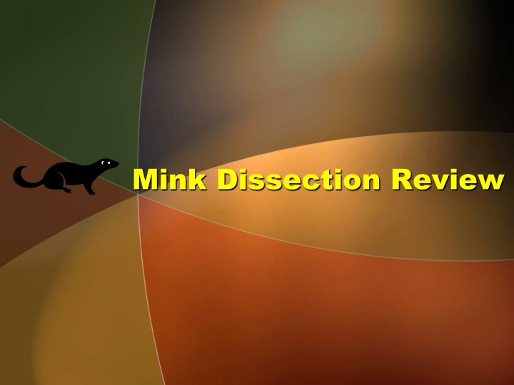 mink dissection review n.