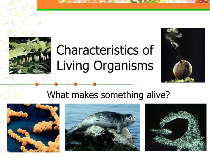 characteristics of living organisms n.