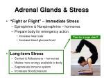 adrenal glands stress