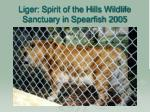 liger spirit of the hills wildlife sanctuary in spearfish 2005