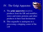 iv the golgi apparatus