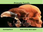 primate fossils