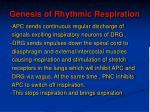 genesis of rhythmic respiration