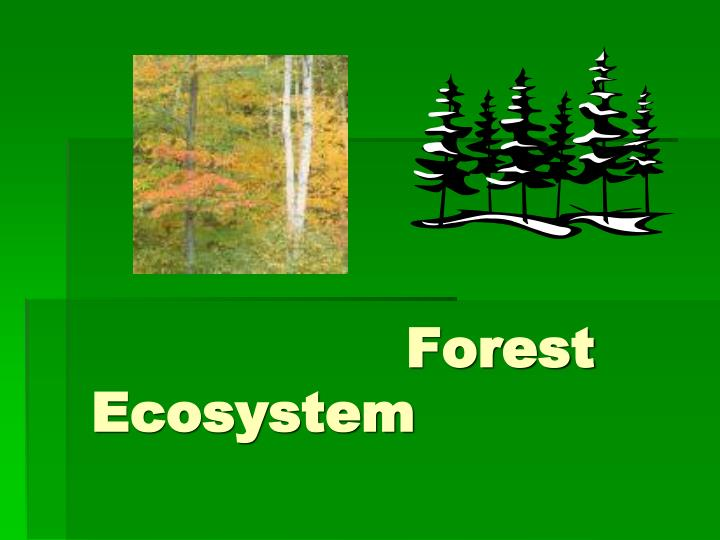 forest ecosystem n.