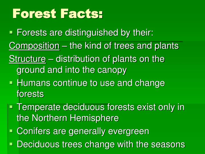 Forest Ecosystem on Rain Forest Ecosystem