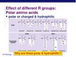 effect of different r groups polar amino acids
