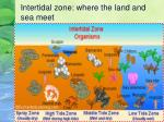 intertidal zone where the land and sea meet