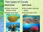 two types of corals