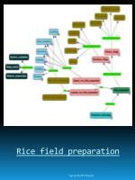 rice field preparation