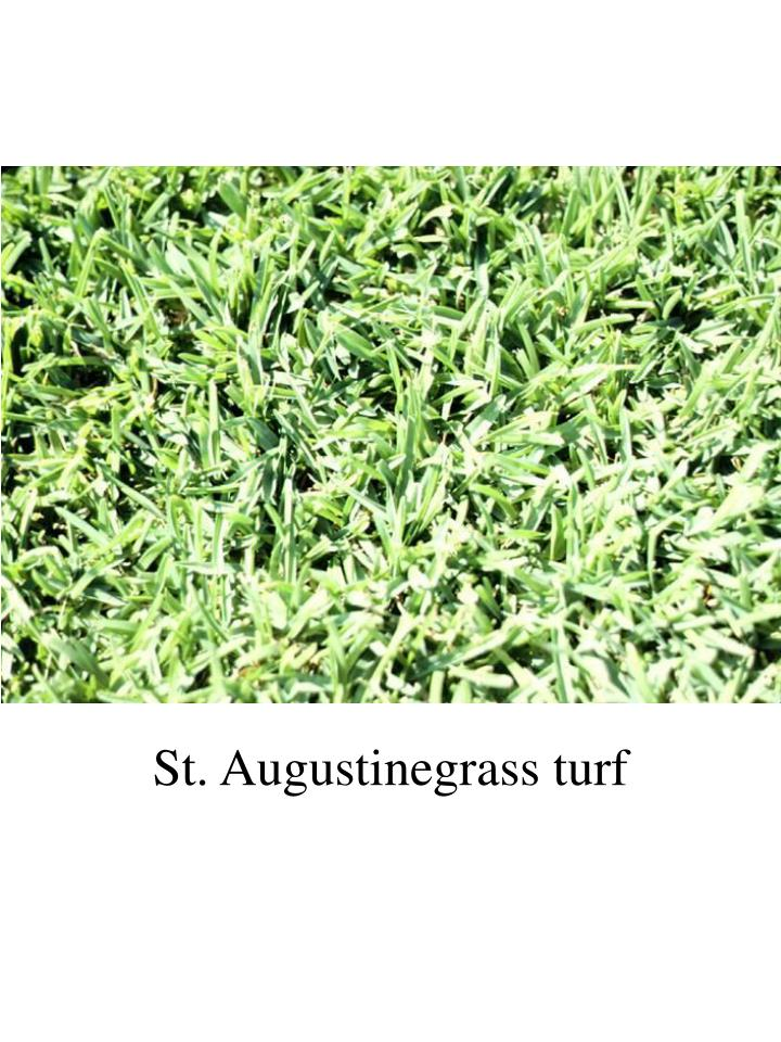 St. Augustinegrass turf