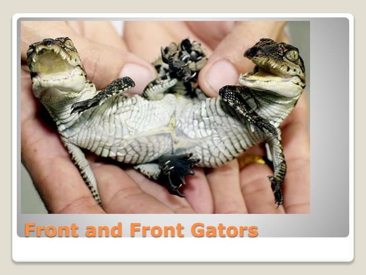 Front and Front Gators
