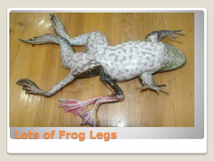 Lots of Frog Legs