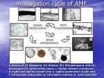 propagation cycle of amf