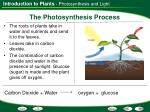 the photosynthesis process