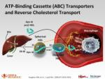 atp binding cassette abc transporters and reverse cholesterol transport