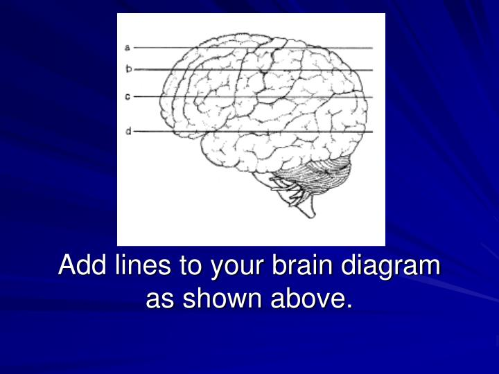 add lines to your brain diagram as shown above n.