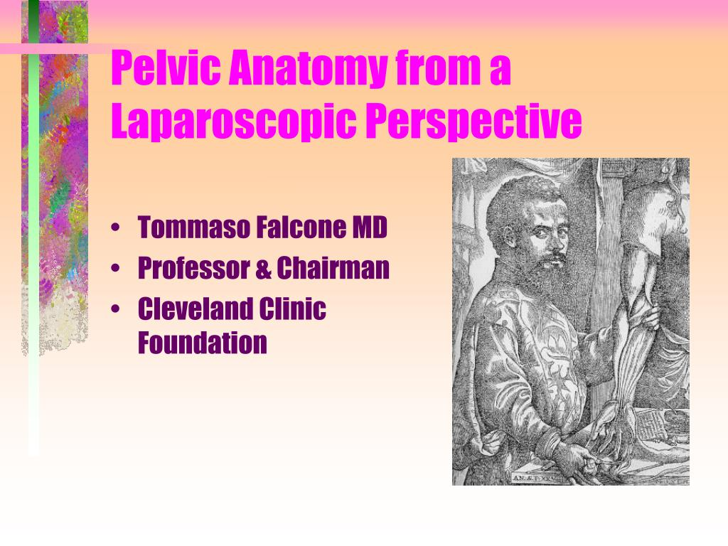 PPT - Pelvic Anatomy from a Laparoscopic Perspective PowerPoint ...