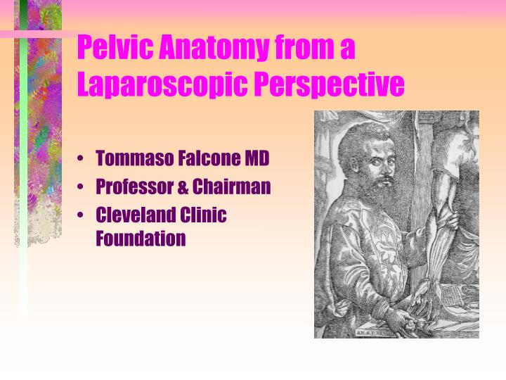 pelvic anatomy from a laparoscopic perspective n.