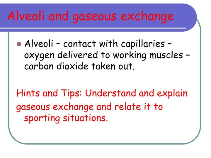 Alveoli and gaseous exchange