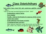 class osteichthyes