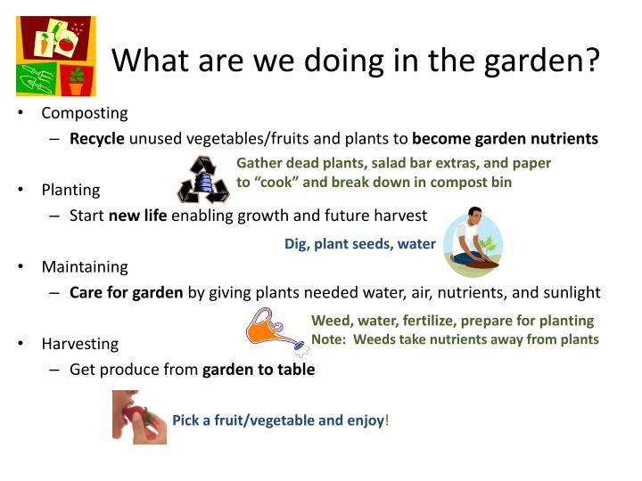 What are we doing in the garden?